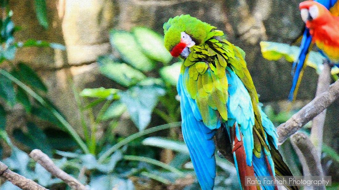 parrotb