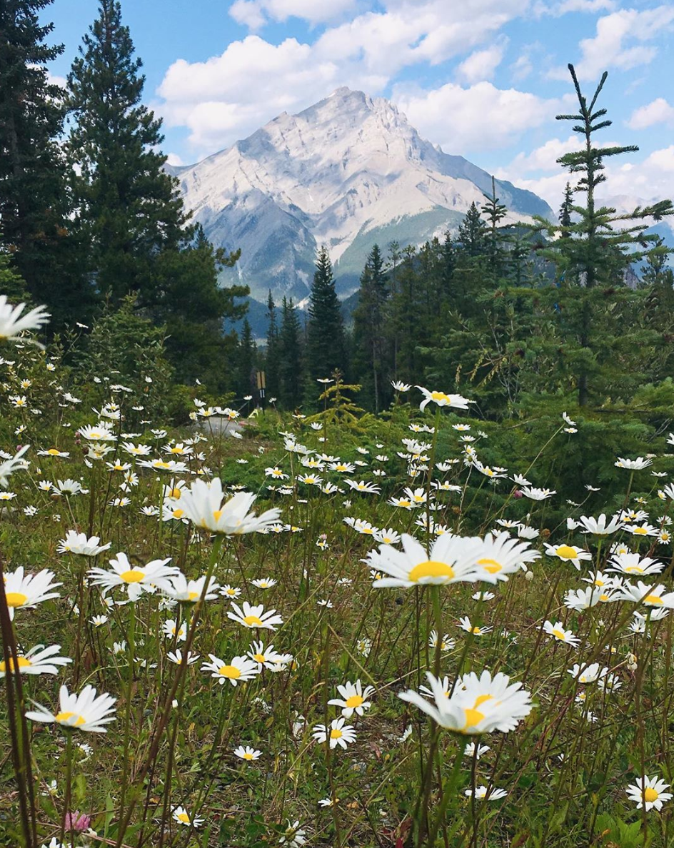 Mountain and flowers in Canada. What to do this break.